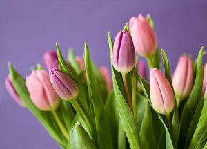 tulpen voor thuis maxyxgenieten